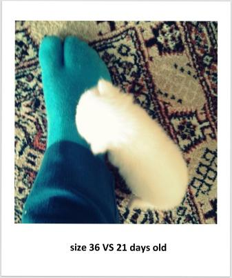 size36VS21daysold